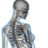 見た目年齢が若い人は骨密度が高いという事実!シワ・たるみの予防にはカルシウム!