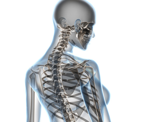 X-ray female anatomy over a white background