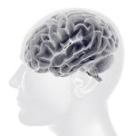 「腸脳相関」腸内細菌で行動・性格・ストレス耐性が変わる!