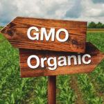 遺伝子組み換え作物は危険なのか?健康上のリスクとは?